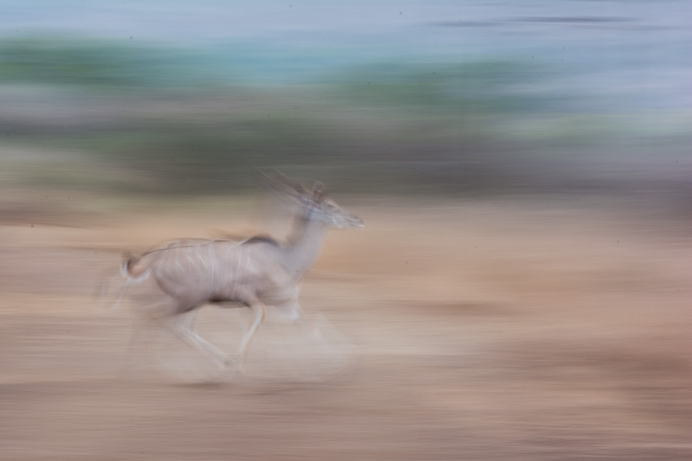 "One of Gary's first experiments with ""motion blur"" (this is a nyala)"