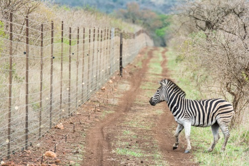 Image result for south africa game preserves fences